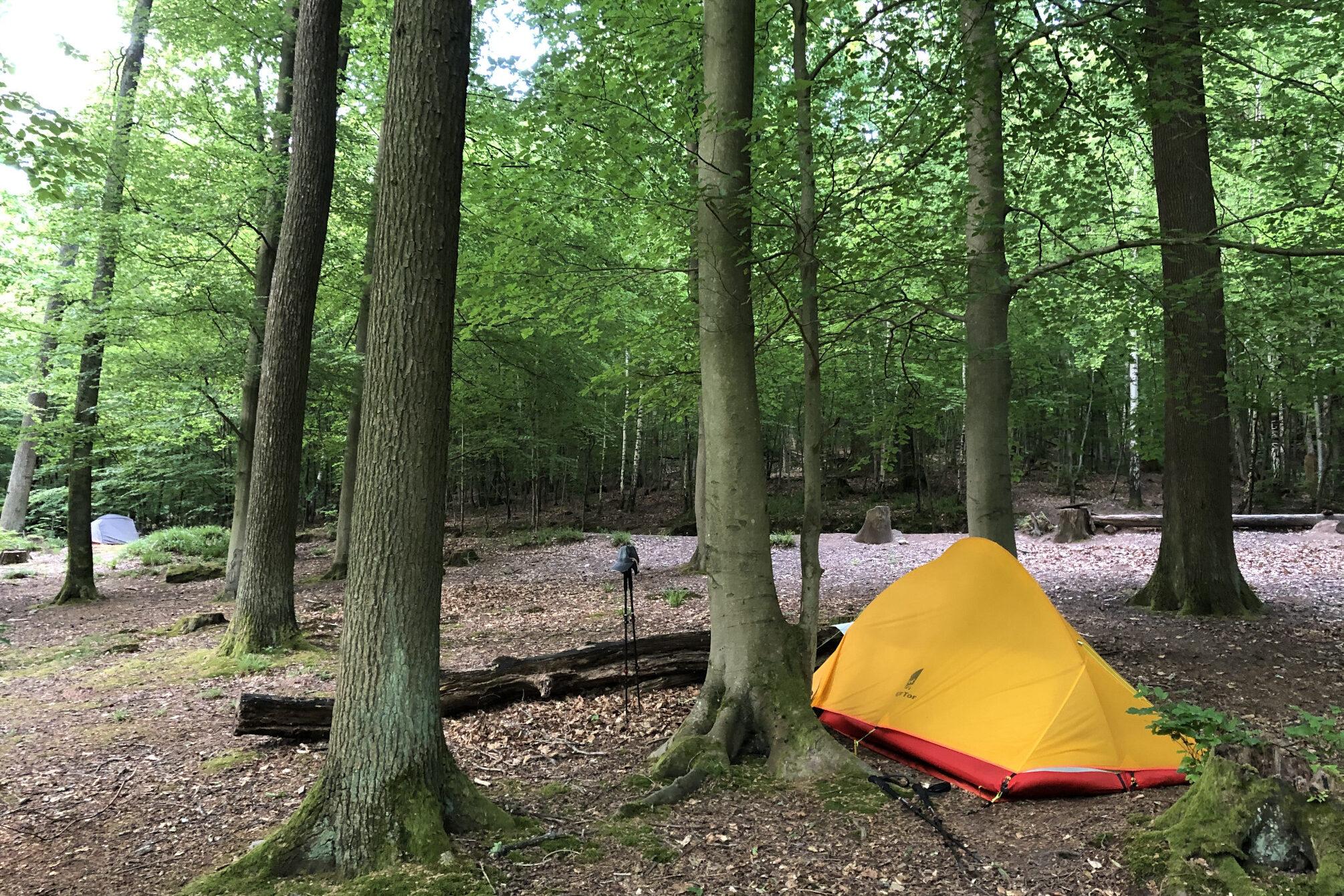 Trekking im Pfälzer Wald